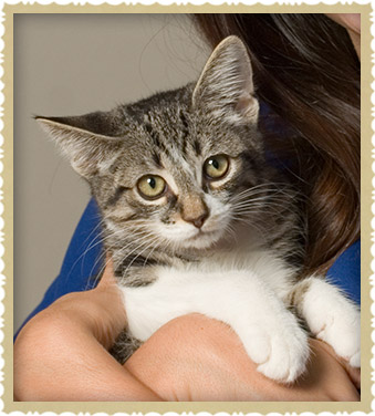 Veterinary Care for Kittens and Puppies